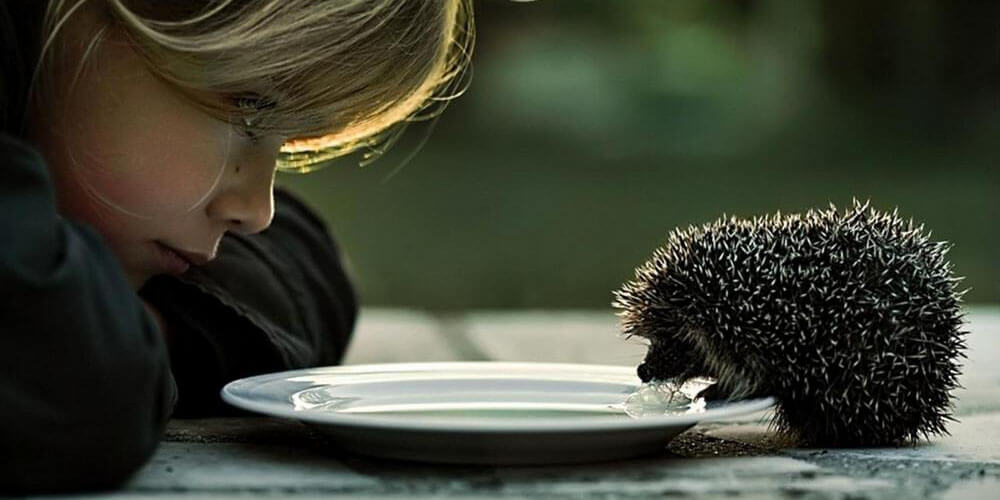 girl_feeds_the_hedgehog_maly_ladowe_jez_1280x800_hd-wallpaper-1204591.jpg